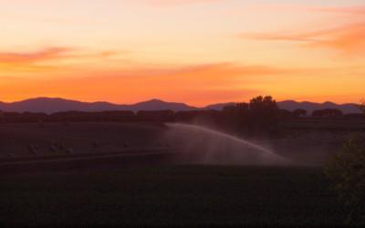 Campi al tramonto