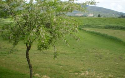 I campi attorno al podere