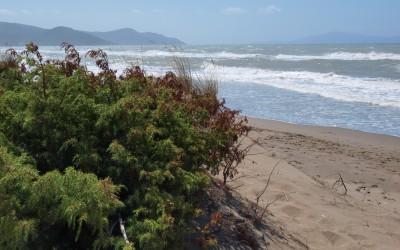 Le meravigliose spiagge della Maremma