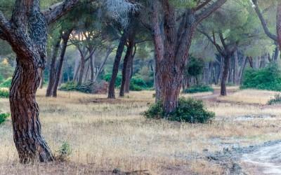 Bosco del parco dell'uccellina